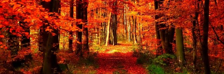 geeksplatform-is-on-a-short-autumn-break-Hearthstone